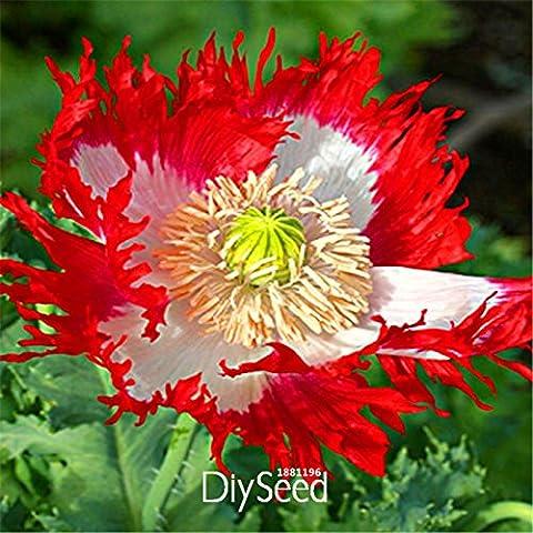 Prezzo più basso! 100 semi PCS danese bandiera fiore, bello fiori in vaso bonsai Per la casa giardino