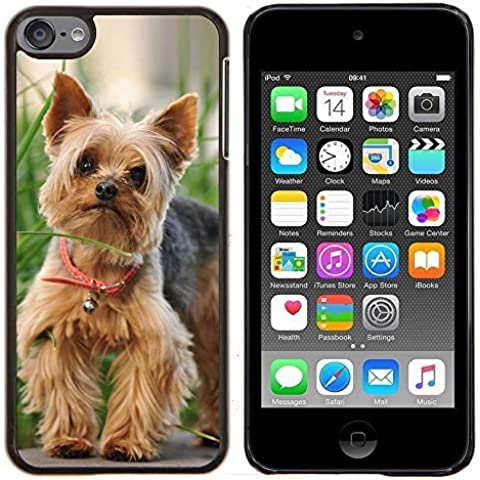 # Duro Custodia protettiva Caso Cassa PC Coprire Hard Protective Case forApple iPod Touch 6 6th Touch6 # Carino Felice Yorkie Terrier Cute Happy Yorkie Terrier# Gift Phone Case Housing