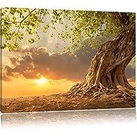 Radicato forte albero nel tramonto, Formato: 60x40 su tela, XXL enormi immagini completamente Pagina con la barella, stampa d'arte sul murale con telaio, più economico di pittura o un dipinto a olio, non un manifesto o un banner,