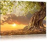 Verwurzelter starker Baum im Sonnenuntergang, Format: 100x70 auf Leinwand, XXL riesige Bilder fertig gerahmt mit Keilrahmen, Kunstdruck auf Wandbild mit Rahmen, günstiger als Gemälde oder Ölbild, kein Poster oder Plakat