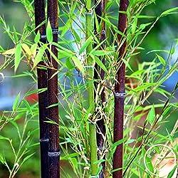 Shopmeeko Ein Paket 50 Stück Pflanzen Fresh Giant Essbare Bambuspflanzen China Seltene köstliche Gemüsepflanzen für Sweet DIY Home Garden: Multi-Colored
