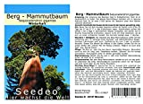 Seedeo® Berg - Mammutbaum 50 Samen