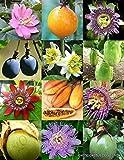 Portal Cool Passionsfrucht-Mix, Rare Passions Essbare tropische Kletterpflanze Misch Seed -15 Samen