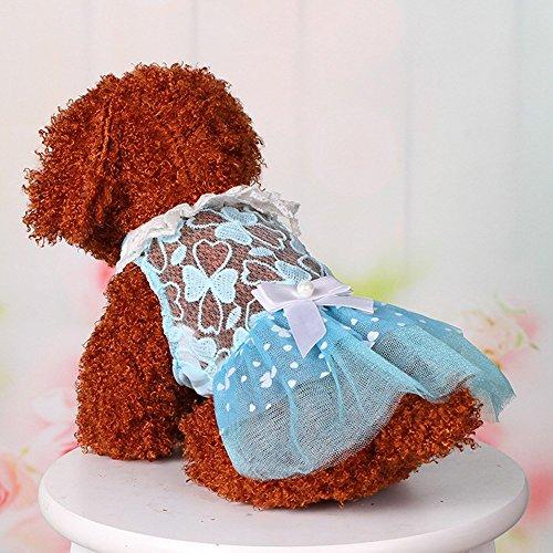 Pet Online Kleiner Hund Sommer Spitze Bow rock Frühling Sommer Rock, Blau, ()