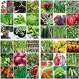 Portal Cool 23# _Blueberry (50pc): Heirloom Jardin potager Graines non Ogm/hybride Banque Survie des plantes bio Lot