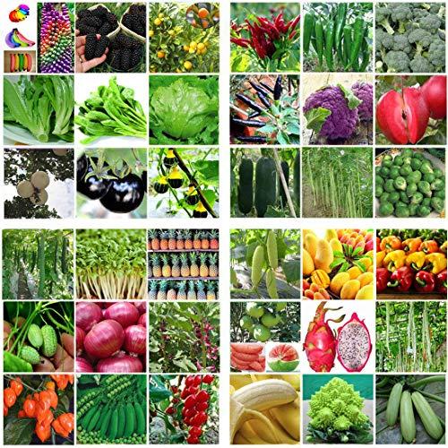 Portal Cool 106# _Pipa (20pc): Heirloom Jardin potager Graines non Ogm/hybride Banque Survie des plantes bio Lot