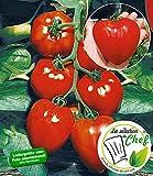 """BALDUR-Garten Veredelte Herz-Tomate """"Fleurette"""" F1,2 Pflanze Tomatenpflanze"""