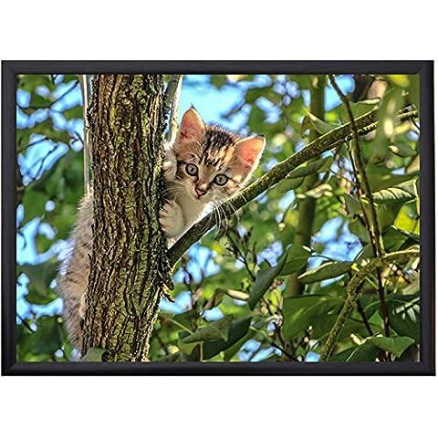 Calendula regali di lusso vassoio–Gattino in albero - Gattino Albero