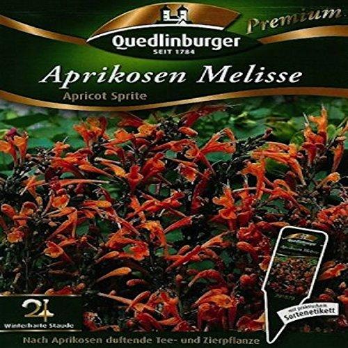 Aprikosen Melisse - Agastache aurantiaca QLB Premium Saatgut Blumen zweijährig