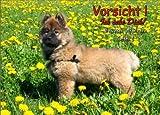 INDIGOS UG - Türschild FunSchild - SE487 DIN A4 laminiert ACHTUNG Hund Eurasier - für Käfig, Zwinger, Haustier, Tür, Tier, Aquarium