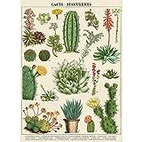 Decorative Wrap 20X28 Cacti & Succulents