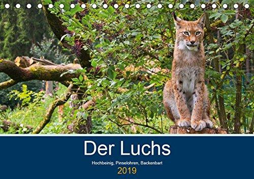 Der Luchs - Hochbeinig, Pinselohren, Backenbart (Tischkalender 2019 DIN A5 quer): Unsere größten und seltensten Katzen. (Monatskalender, 14 Seiten ) (CALVENDO Tiere)