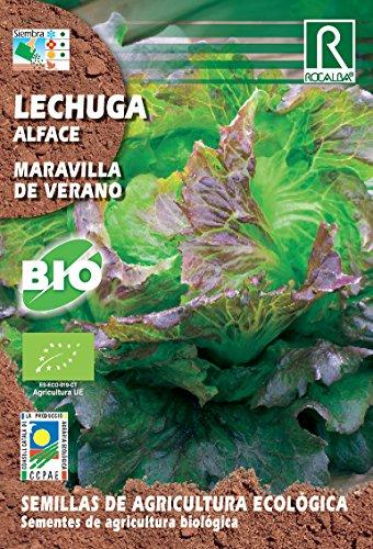Semillas ECOLOGICAS Lechuga Maravilla de Verano 2 gr.