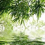 lifestyle4living Bild, Wandbild, Glasbild, Tropic mit Bambus am Wasser, grün, weiß, Entspannung, Relax, Wasser, 30x30 cm