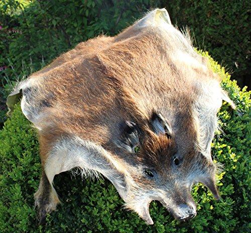 Wildschweinfell Schwarzwild