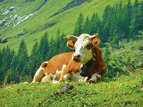 Artland Leinwand auf Keilrahmen oder gerolltes Poster mit Motiv Kattobello Kuh auf der schweizer Alm Tiere Haustiere Kuh Fotografie Natur C4AF