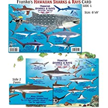 Hawaiian Shark and Ray Fish ID for Scuba Divers and Snorkelers