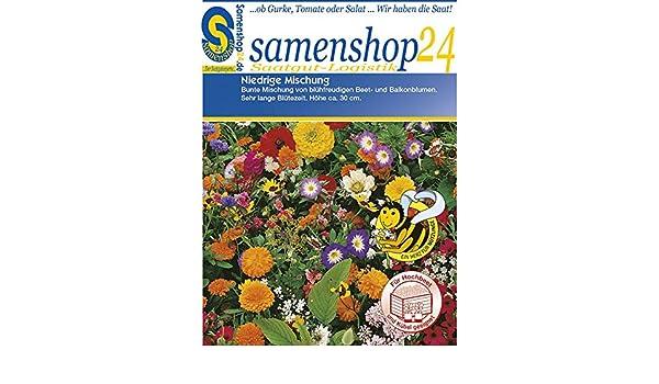 Gjyia 10PCS Wiederverwendbarer Bienenf/änger Blumenf/örmige Fliegende Insekten Trichter Pest Wespenfalle