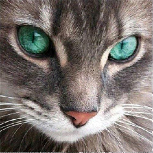 LAZODA DIY 5D Diamant Malerei nach Anzahl Kits, Vollbohrer Kristall Strass Stickerei Bilder Kunst Handwerk für Home Wand Dekoration Green-eyed Katze 9,8 x 9,8 Zoll (Katze Eyed Green)