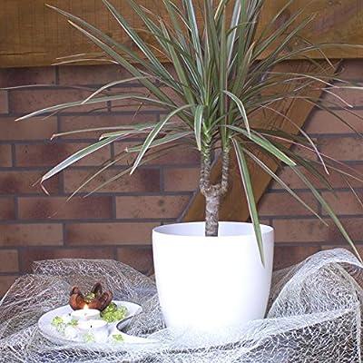 Terra 1401383100 Coubi Kunststoff Übertopf 15 cm, weiß von Terra auf Du und dein Garten