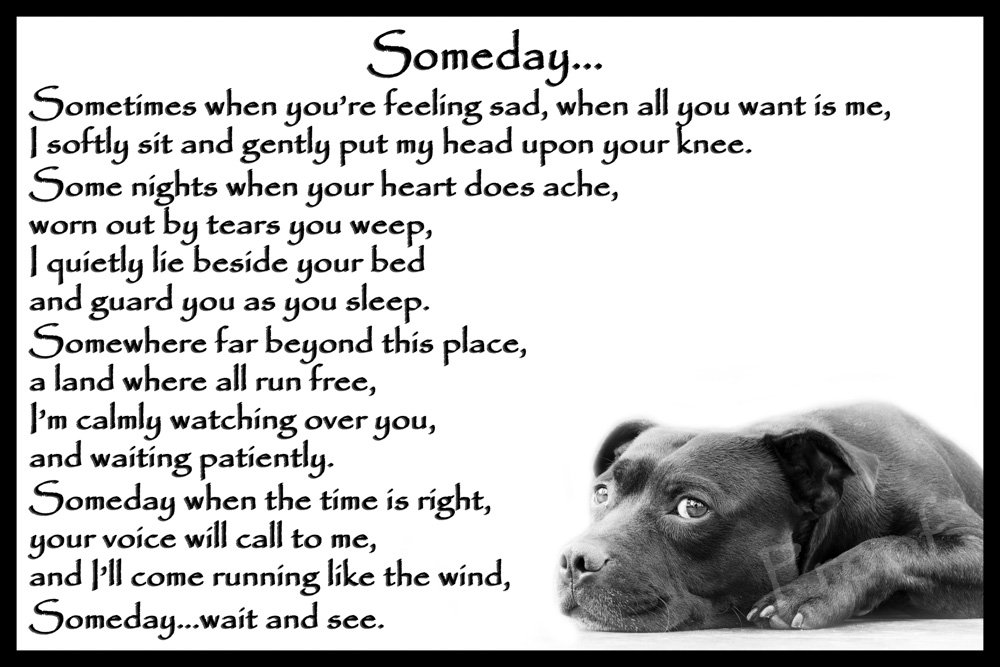 Staffordshire Bull Terrier Staffy bereavement pet dog loss sympathy Memorial – Someday