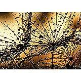 Vlies Fototapete PREMIUM PLUS Wand Foto Tapete Wand Bild Vliestapete - Pusteblume Löwenzahn Natur Blume - no. 1316, Größe:208x146cm Vlies