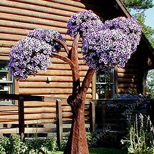 200 pcs / sac Petunia Graines Bonsaï Graines de fleurs Court Taille Jardin Fleurs Graines d'intérieur ou extérieur Plante en pot Livraison gratuite Violet