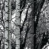 d-c-fix, Folie, Design Wood, Birkenwald, selbstklebend, 45 cm breit, je lfm