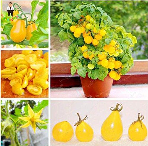 100 Pcs jaune poire graines de tomate délicieux fruits bio Juicy légumes frais Graines jardin Bonsai Seed