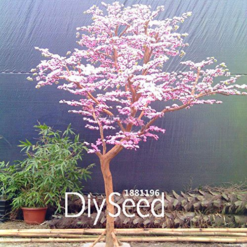 Promoción! 10 PC / porción rojas flores de cerezo japonés Semillas Semillas Patio Jardín Bonsai Tree pequeñas semillas del árbol de Sakura de los colores mezclados,