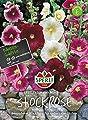 Sperli Stockrose SPERLI´s Simplex Mischung von Sperli-Samen auf Du und dein Garten