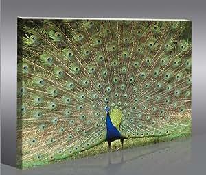 Peacock Paon 1p * Tableau sur Toile Poster Tableaux Images Impression Artistique