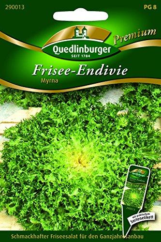 Endivie Frisee- Myrna - Cichorium endivia L. QLB Premium Saatgut Salate