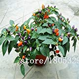 SwansGreen Black : Rainbow Chili peppers seeds 100pcs Multi color Pepper seeds Interest Mini Garden Home Plant
