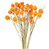 HUAESIN 30 Tallos Flores Secas Naturales Decoracion Craspedia Naranja Ramo Flor Seca Artificial para Hogar Boda Fiesta Jarron