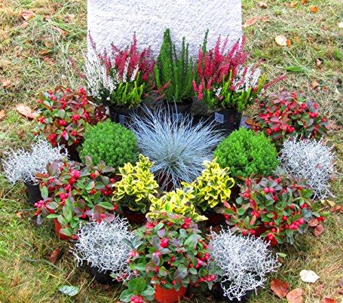 Grabbepflanzung Pflanzen-Set Urnengrab oder Einzelgrab 18 winterharte mehrjährige Pflanzen, Stauden zur Grabgestaltung