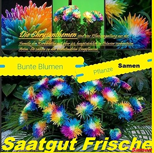 25x-bunte-blumen-samen-regenbogen-saatgut-blumensamen-hingucker-pflanze-blumen-raritat-garten-neuhei