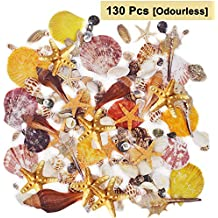 BELLE VOUS Conchas de mar Surtidas (130 Piezas) - Coloridas Conchas decoración en el