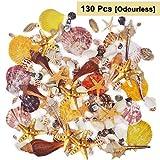 BELLE VOUS 130 Deko Muscheln - Haus Dekoration, Echte Seesterne Muscheln zum Basteln und Meeresschnecken, für Kerzenherstellung, Strand Motto-Party, Aquarium und Maritime Hochzeits-Deko