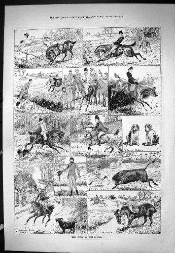 old-original-antique-victorian-print-sporting-dramatic-news-1886-signs-zodiac-hunting-gemini-libra-c
