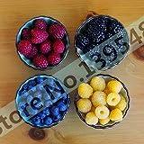 Pinkdose 4 Arten von Farb 4000 PCS Bonsai Himbeere (1000 blau, 1000black 1000 rot, gelb 1000) köstlich Fruchttopfpflanzen