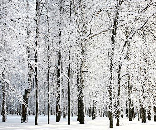 WaW Fotohintergrund Winter Wald 3x2m Stoffhintergrund Fotografie Hochzeit Studio Requisiten (Foto Kulissen Von Paris)