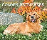 Golden Retriever – For the love of 2019 - 18-Monatskalender mit freier DogDays-App (Deluxe-Kalender)