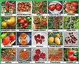 Lawn & Patio - Tomaten Set 2 :: Historische alte Tomatensorten 20 Arten Samen Fleischtomate Cherrytomate Cockteiltomate Tomate Mix Paket Mischung Rarität