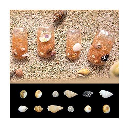 Born Pretty 1 Boîte 3D Nail Décoration Mini Coquille Manucure Nail Art Accessoires