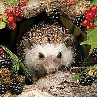 Ambiente Serviettes Lunch/Party 33x 33cm Autumn-Autumn Hedgehog Hedgehog-Balckbe Cherries-Blackberries