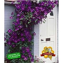Suchergebnis Auf Amazonde Für Schattenpflanzen Winterhart