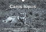 Canis lupus (Wandkalender 2017 DIN A4 quer): Impressionen in schwarz-weiss aus dem Leben der Wölfe (Monatskalender, 14 Seiten ) (CALVENDO Tiere)