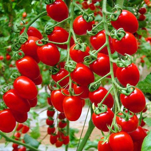 200 - graines de tomates grecques Heirloom graines de jardinage douces plantes semences non ogm végétales pour la maison jardin plantation envoyé cadeau