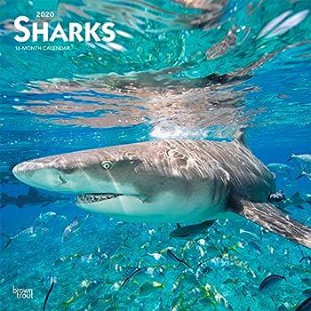 Sharks 2020 Calendar